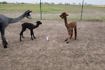 YaYa's Alpaca Farm, Garden City, United States