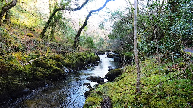 Glengarriff Nature Reserve