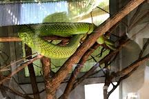 Bio-Ken Snake Farm, Watamu, Kenya