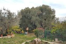 L'Ulivo Piu Antico d'Europa, Fara in Sabina, Italy