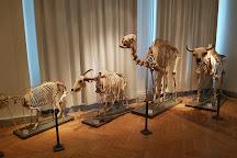 Natural History Museum (Luonnontieteellinen Museo), Helsinki, Finland