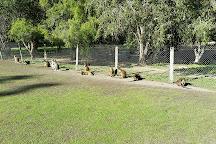 Billabong Zoo: Koala & Wildlife Park, Port Macquarie, Australia