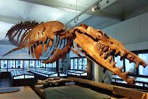 Musee d'histoire naturelle de Nantes, Nantes, France
