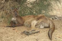 Hanson Bay Wildlife Sanctuary, Hanson Bay, Australia
