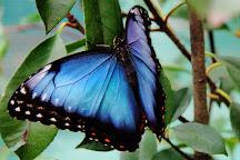 Butterfly House Praid, Praid, Romania