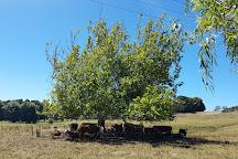 Taitua Arboretum, Hamilton, New Zealand