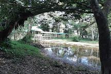 El Jardin de la Victoria Regia, Leticia, Colombia
