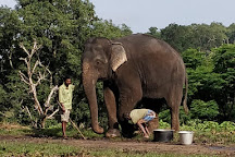 Theppakadu Elephant Camp, Nilgiri, India