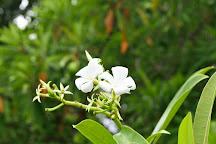 Madu Ganga Biodiversity Area, Balapitiya, Sri Lanka