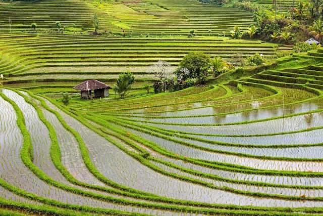 Belimbing Rice Terraces