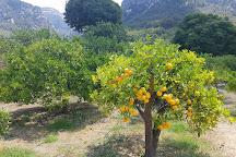 Ecovinyassa, Soller, Spain