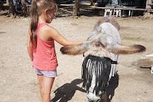 Corfu Donkey Rescue, Paleokastritsa, Greece