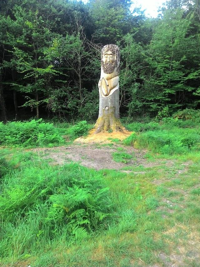 Forêt Domaniale de Crécy