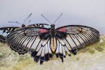 Insectopia, Padirac, France