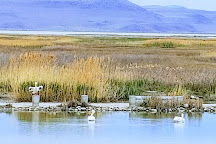 Bear River Migratory Bird Refuge, Brigham City, United States