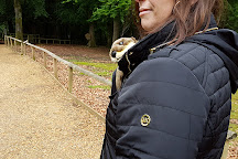 New Forest Wildlife Park, Ashurst, United Kingdom