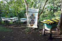 Milea Bee Farm, Lipa City, Philippines
