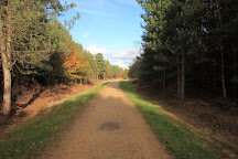 Alice Holt Forest, Farnham, United Kingdom