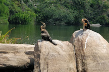 Ranganathittu Bird Sanctuary, Karnataka, India