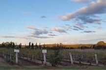 Lake's Folly Vineyard, Pokolbin, Australia