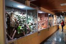 Reptilien Zoo Forchtenstein, Forchtenstein, Austria