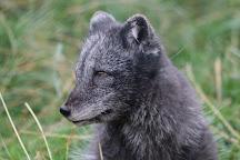 RZSS Highland Wildlife Park, Kingussie, United Kingdom
