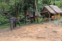 Phang Nga Elephant Park, Phang Nga, Thailand