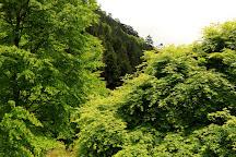 Forest of Tokyo Citizen, Hinohara-mura, Japan