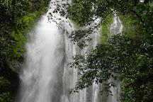Corcovado Hiking Tours, Puerto Jimenez, Costa Rica
