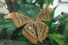 Kipandi Butterfly Park, Tambunan, Malaysia