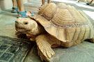 Aquaworld Aquarium & Reptile Rescue Centre