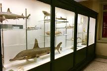 Museo di Zoologia, Bologna, Italy