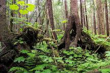 Pacific Rim National Park, Tofino, Canada