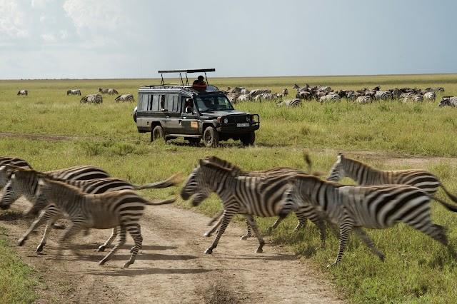Furahia Tanzania Safari & Trekking