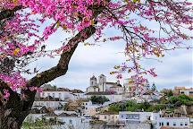 Blossom, Tavira, Portugal