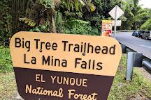 Cascada La Mina (La Mina Falls), El Yunque National Forest, Puerto Rico