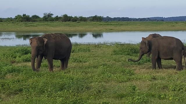 Sigiri Safari
