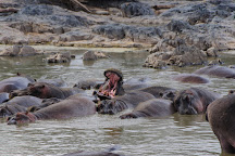 Retima Hippo Pool, Serengeti National Park, Tanzania