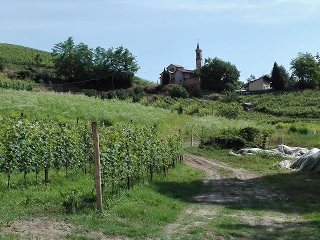 PODERI MORETTI di Moretti Francesco - azienda agricola vitivinicola