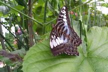 Wye Valley Butterfly Zoo, Ross-on-Wye, United Kingdom