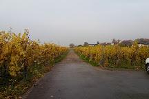 Domaine Viticole de la Ville de Colmar, Colmar, France