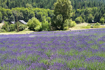 The English Lavender Farm, Applegate, United States