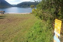 Redwoods, Whakarewarewa Forest, Rotorua, New Zealand