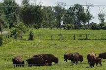 Readington River Buffalo Farm, Flemington, United States