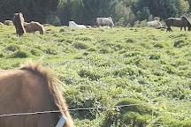 Laxnes Horse Farm, Mosfellsbaer, Iceland
