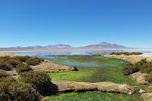 Salar de Tara, San Pedro de Atacama, Chile