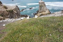 Muriwai Gannet Colony, Muriwai Beach, New Zealand
