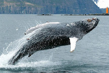 Whale Watching Hauganes, Hauganes, Iceland
