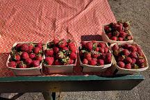 Kalamazoo Farmers Market, Kalamazoo, United States