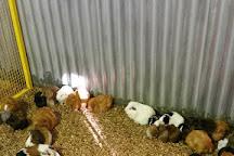 Swan Valley Cuddly Animal Farm, Henley Brook, Australia